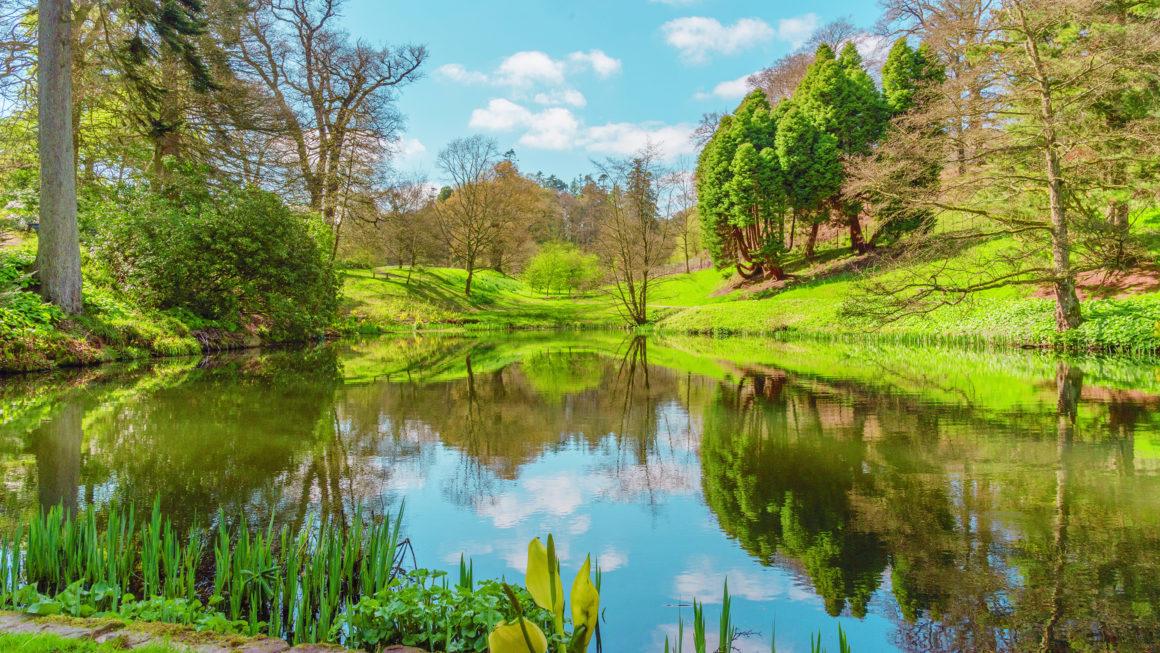 Gales está plantando un bosque nacional que se extenderá por todo el país 9