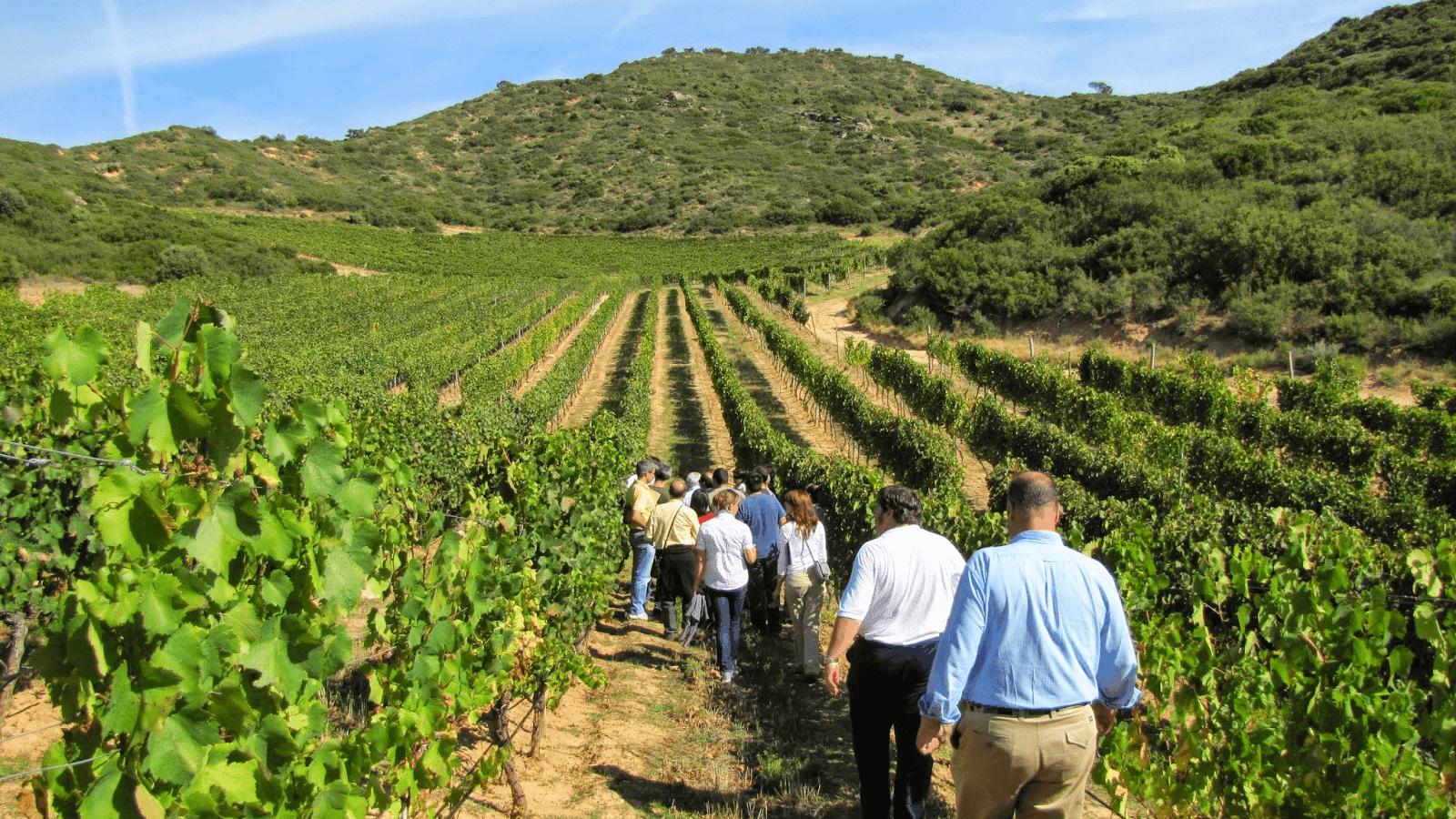 Anuncian la creación de la Organización Mundial del Enoturismo, integrada por 24 países vinculados al mundo del vino 1
