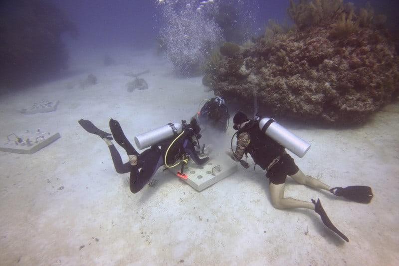 México se une a Grupo Iberostar para implementar un programa de restauración de corales marinos en la Riviera Maya 22
