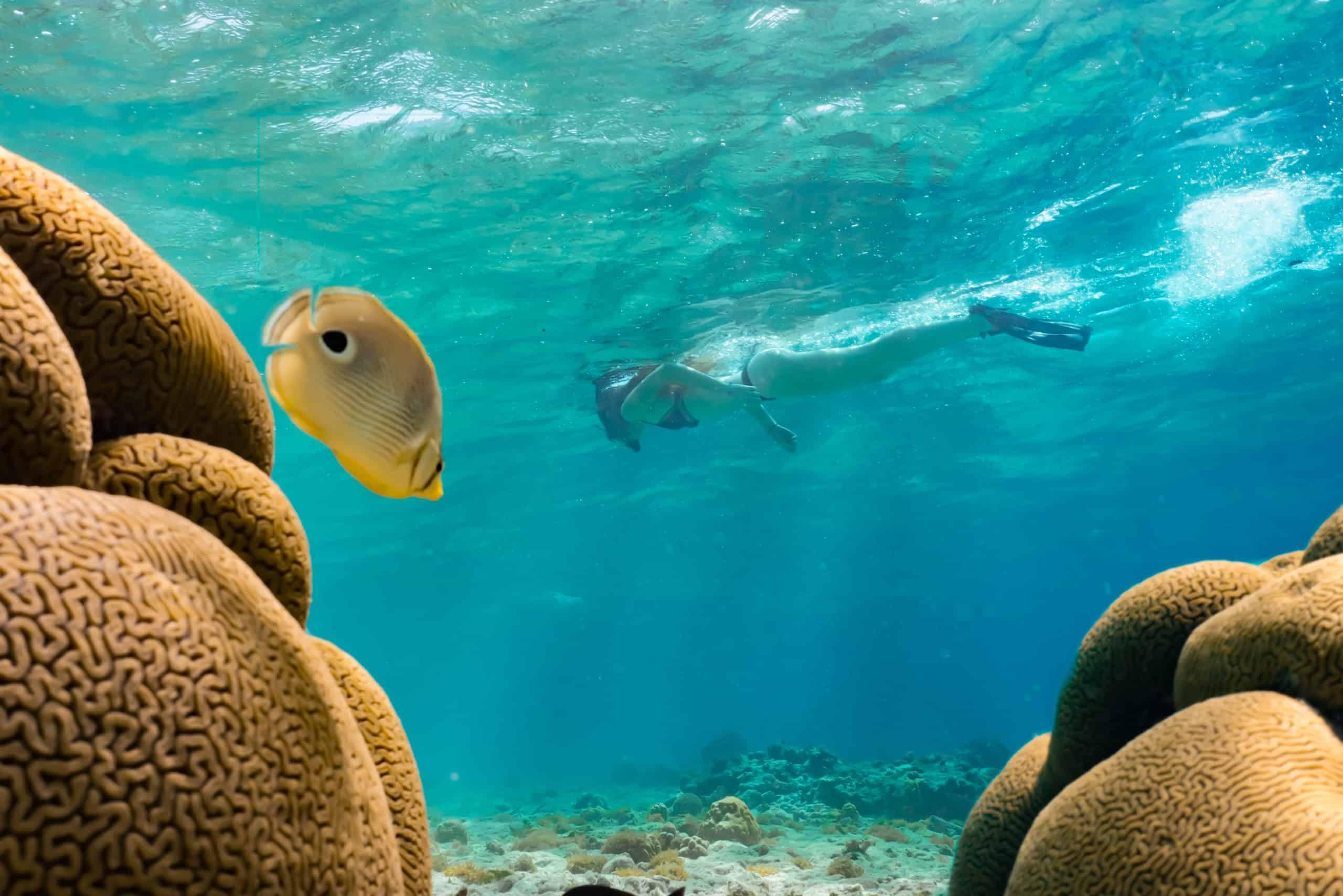 Snorkeling at Mangel Halto